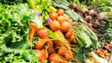 Thinkstockphotos 462359161 Vegetables