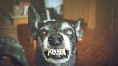 Thinkstockphotos 530998980 Rabies Dog