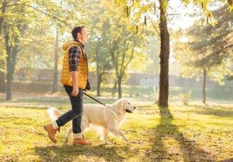 Thinkstockphotos 497710232 Man Walking Dog