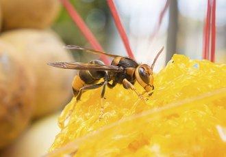 Thinkstockphotos 517380819(5) Wasp