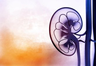 Thinkstockphotos 518556054 Kidney
