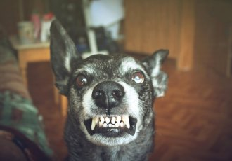 Thinkstockphotos 530998980 Rabies Dog