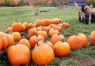 Thinkstockphotos 539655748 Pumpkins