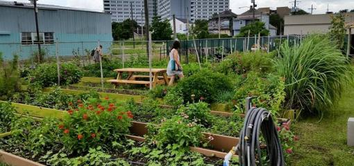 Eat Local With Community Supported Agriculture Programs