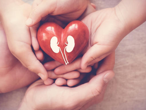 Organ Donation: What's True or False?