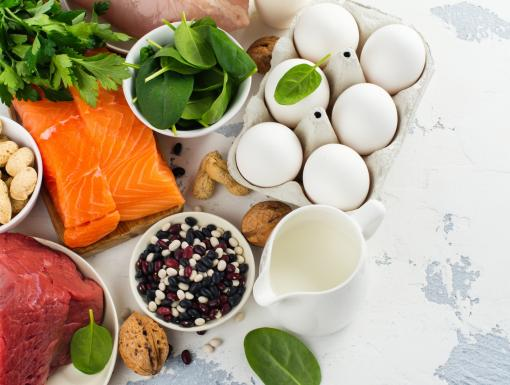 Protein Primer: Incorporating the Right Amount into Your Diet