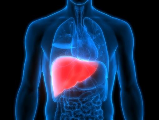 Liver Transplant Facts to Know