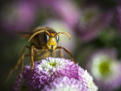 How to Prevent and Treat Insect Stings