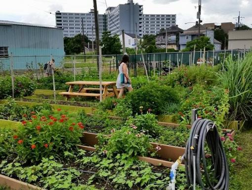 Eat Local With Community-Supported Urban Farms