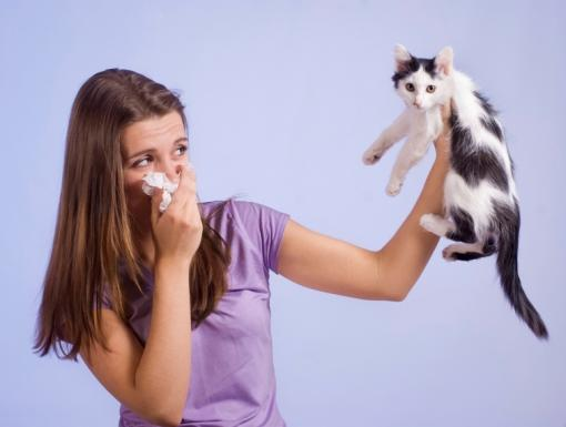 Cats, Dogs and Allergies, Oh My!