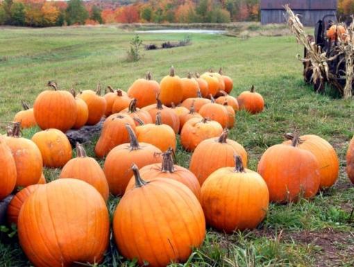 8 Surprising Health Benefits of Pumpkin