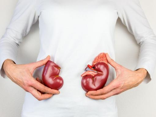 10 Reasons to Love Your Kidneys