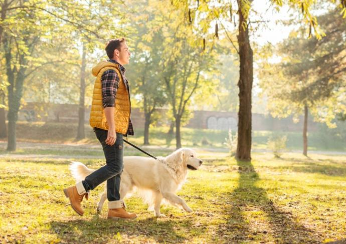 Thinkstockphotos 497710232 Man Walking Dog