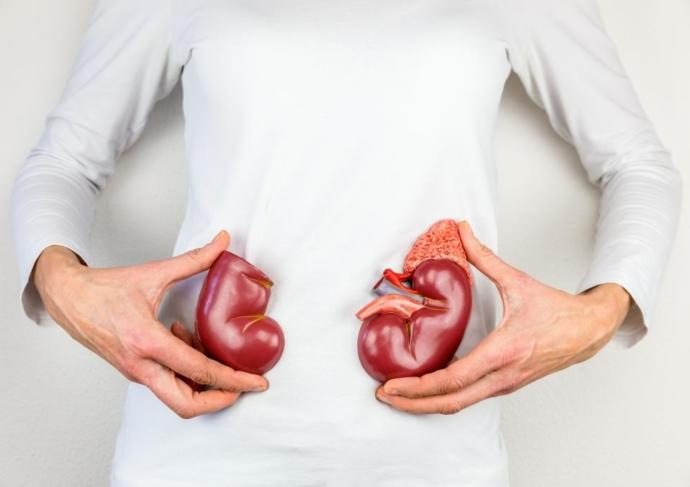 Thinkstockphotos 629358512 Kidneys
