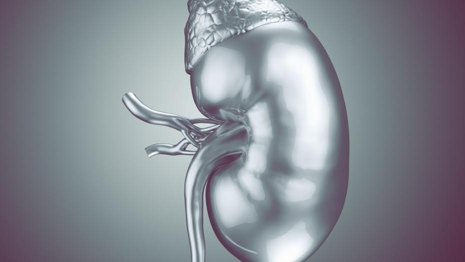 Gettyimages 687429216 Kidney