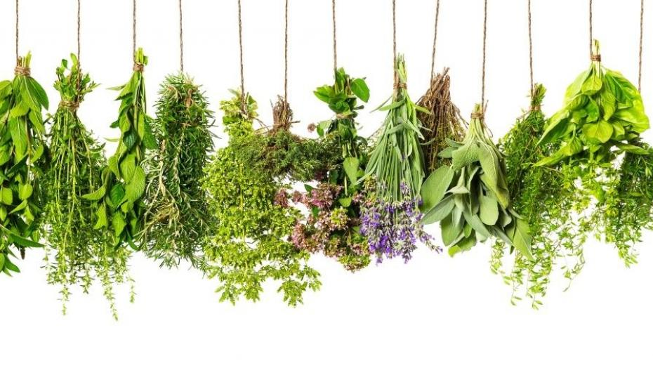 Thinkstockphotos 481331541 Herbs