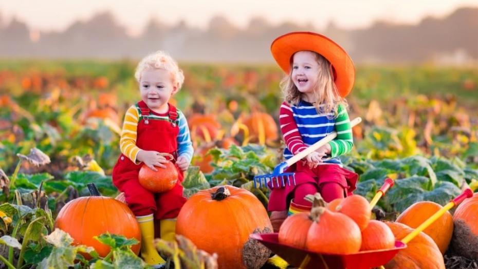 Thinkstockphotos 490303680 Kids Pumpkin Patch