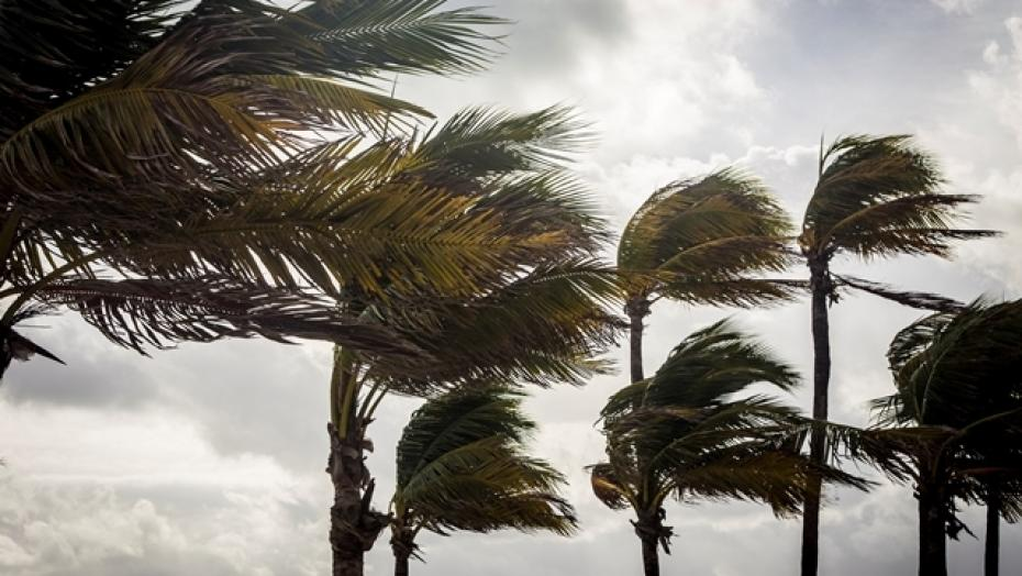 Thinkstockphotos 499087978 Palm Trees In  A  Hurricane