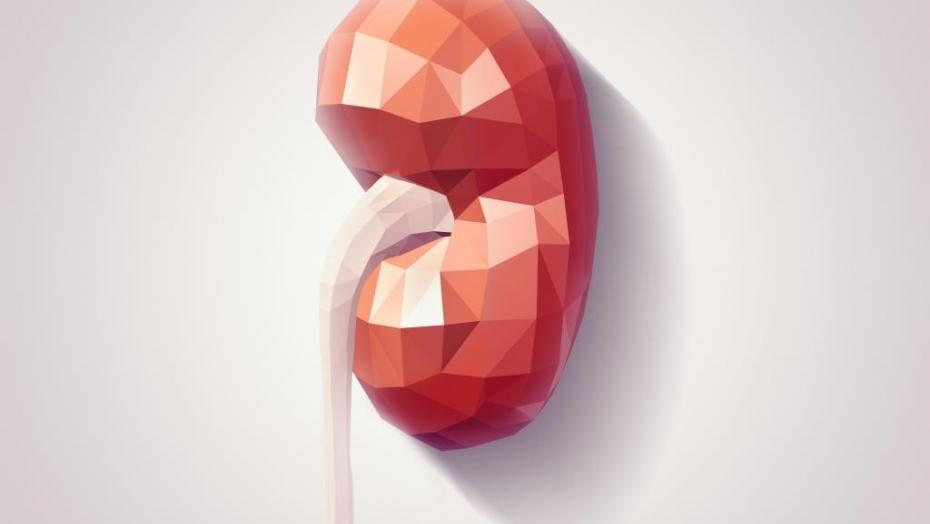 Thinkstockphotos 506800184 Kidney