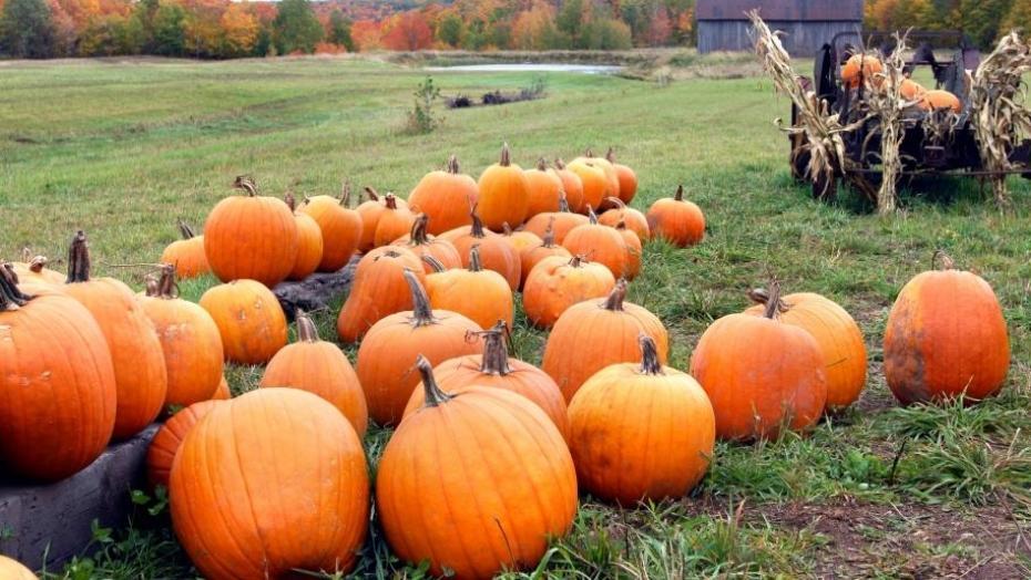 Thinkstockphotos 539655748 Pumpkins