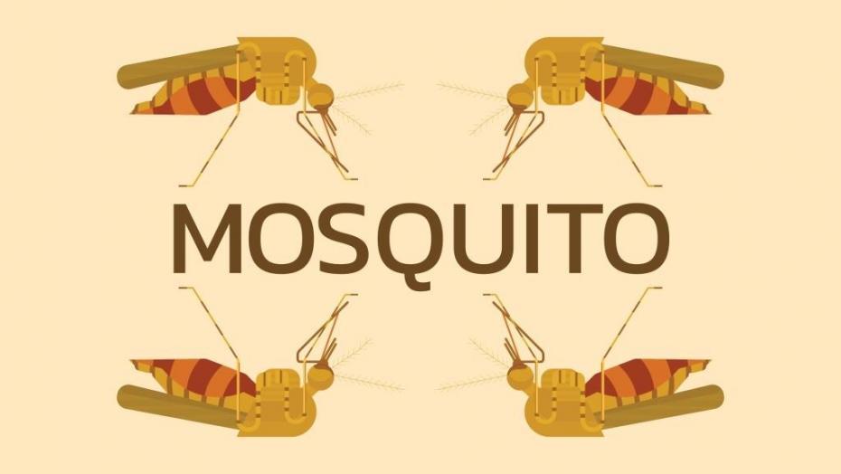 Thinkstockphotos 585618530 Mosquito