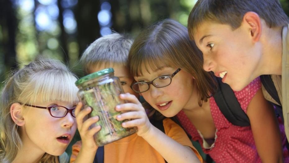 Thinkstockphotos 91704845 Children Looking At Bug In Jar