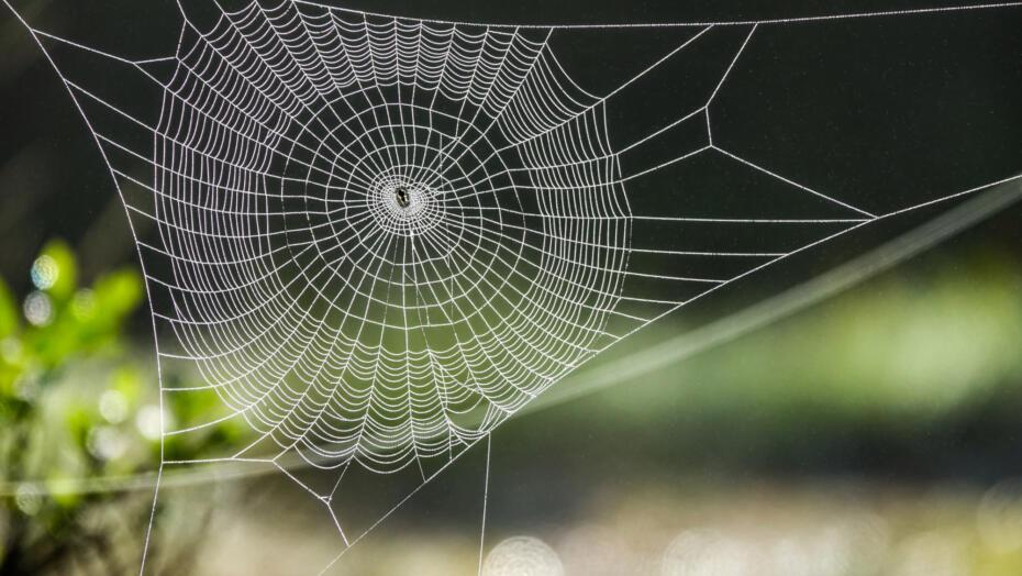 Spider bites spider web