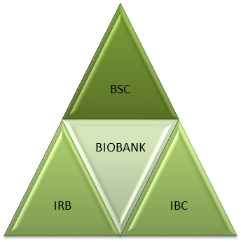 Infographic showing that the Biobank is governed by all three boards/committees