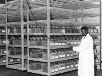 1959_Research_Technician_in_the_Research_Facility.jpg